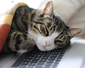 cat_napping_thumbnail
