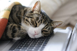 bored cat sleeping laptop computer